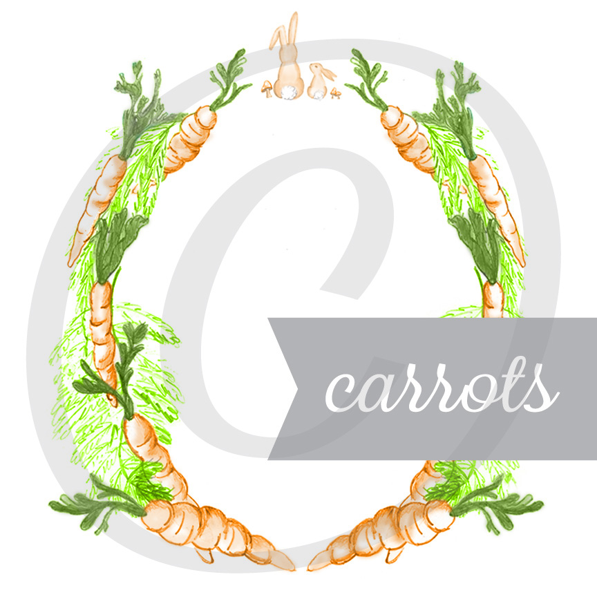 Carrots Hand Illustrated Graphic